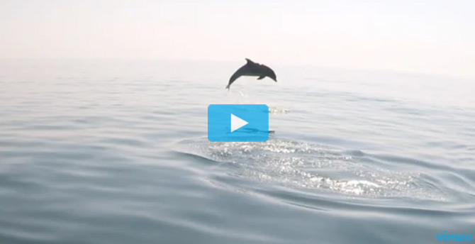 Nik Pattantyus Dolphin Video